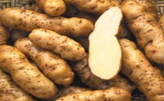 Makah Ozette Potato