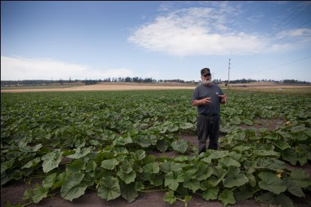 Dale Sherman in his field of Sugar Hubbard Squash