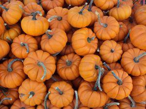 800px-Mini_pumpkins